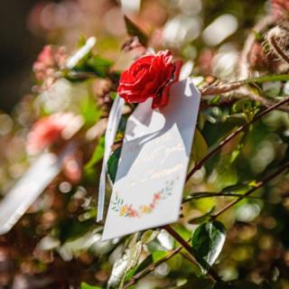 photo-rose-