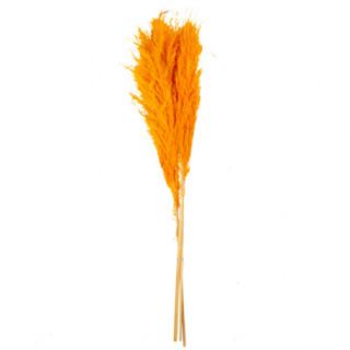 3 Branches de fleur de pampa - Moutarde - 80 cm