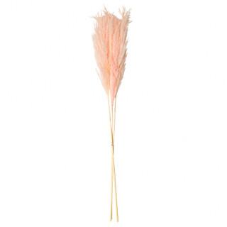 3 Branches de fleur de pampa - Rose - 80 cm