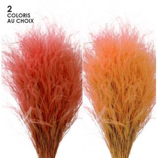 Bouquet de stipa séché rose ou orange
