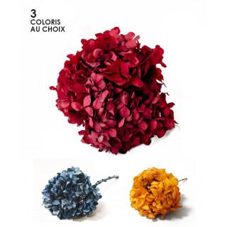 Hortensia stabilisérouge, bleu ou orange