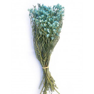 Bouquet d'oxodia séché bleu