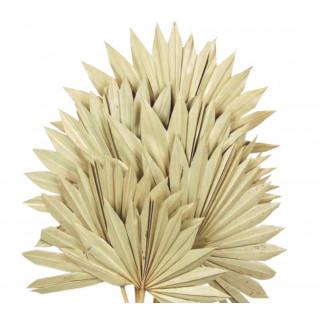 Feuilles de palmier séchées