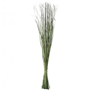 Bouquet herbe de roseaux séchée 150gr - 100/120cm