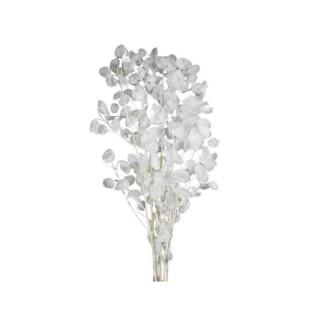 Bouquet monnaie du pape séchée 35-60gr - 60-90cm