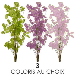 Bouquet monnaie du pape séchée de couleur