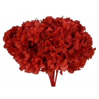 Hortensia stabilisée rouge, rose, blanc