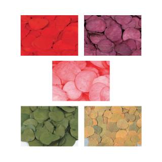 Feuilles séchées et colorées