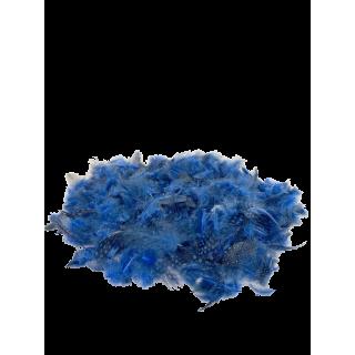 Plumes de Guinée bleues à pois 30 gr