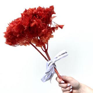 Hortensia stabilisée rouge