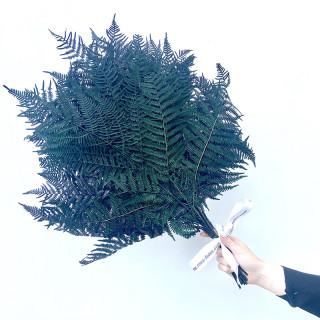 Bouquet de fougère stabilisée