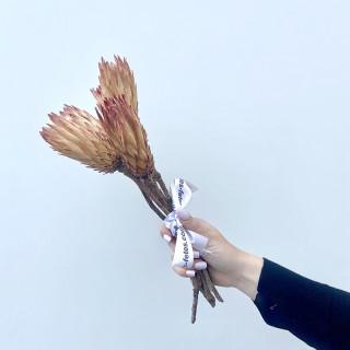 Fleurs de Protea séchées