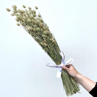 Bouquet de Phalarys