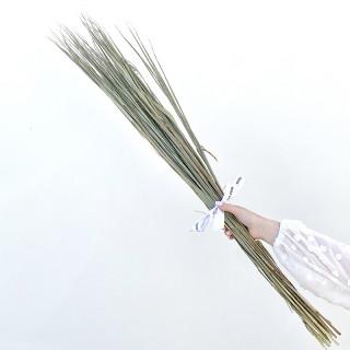 Bouquet herbe de roseaux séchée