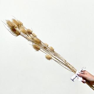 Bouquet de fleurs de chardon séchées