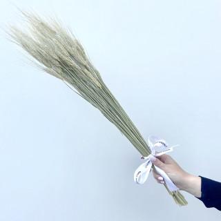 Bouquet de blé barbu séché